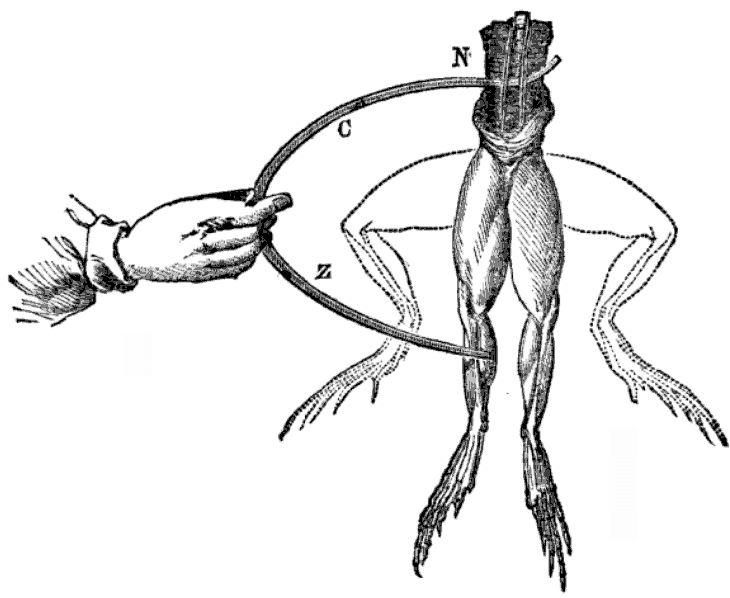 ee 2 3 electrifying medicine pt 2 italian frog legs dr pembroke's clinic
